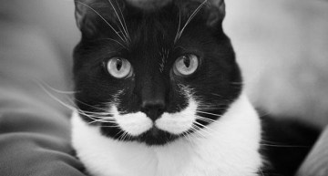 7 Classy Cats With Moustaches – #Happy Friday