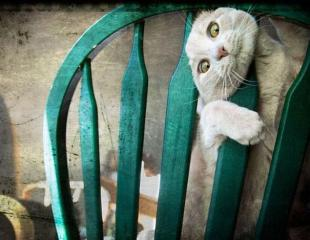 funny-cats-dogs-stuck-furniture-25
