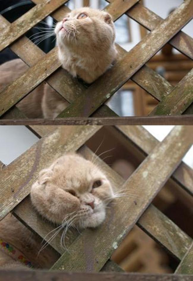 cat-mistakes-0