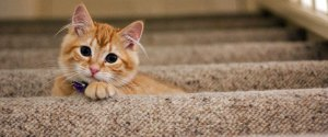 Orange tabby cat on staircase