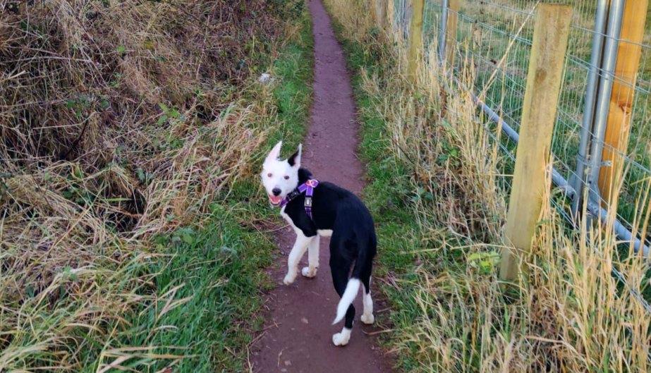 Isla enjoying a Kitten Kaboodle walk