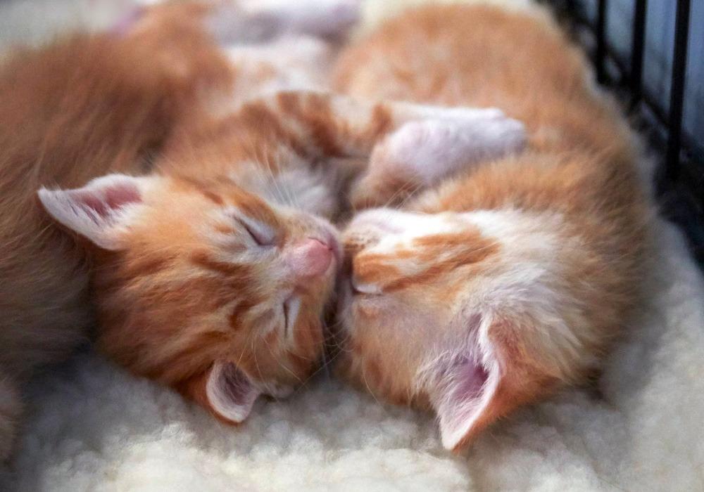 Kitten Care Basics Kitten Rescue