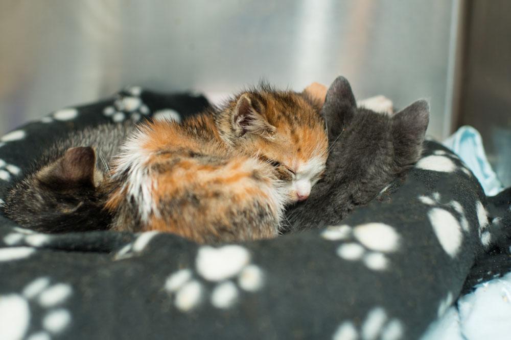 Raising Orphaned Kittens Kitten Rescue