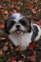 Teddy, born in 2011