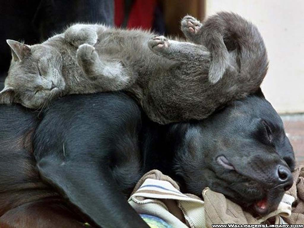20 Cute Cats With Dogs