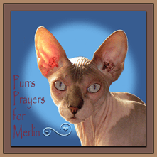 Purrs and Prayers for MERLIN [Badge]
