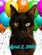 Simons birthday