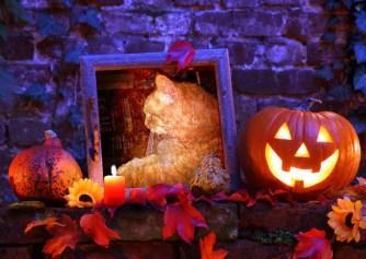 halloween-toby