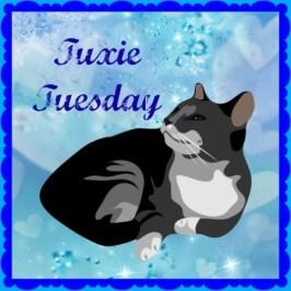 tuxie-tuesday