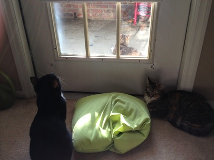 Bird Watching Cats