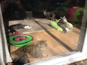 Sunbathing Cats