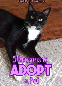 5 Reasons to Adopt a Pet