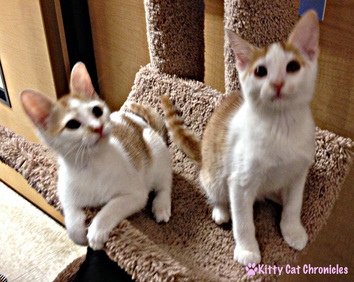 Sunny & Shelby - Circle of Friends Animal Society