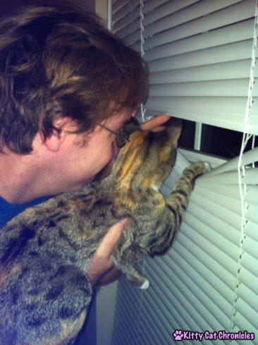 Delilah - Neighborhood Watch Cat