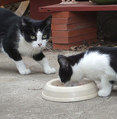 Feral Cats - how to help them by feeding them