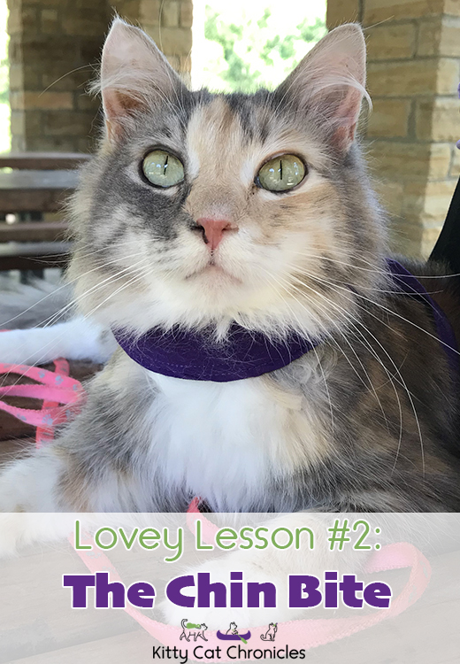 Lovey Lesson #2: The Chin Bite - dilute tortie cat