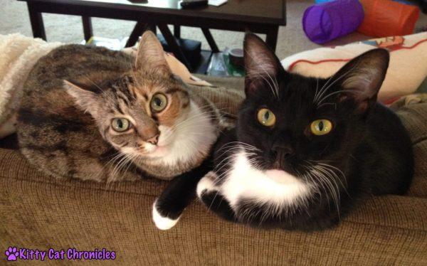 Then & Now: Delilah & Sampson