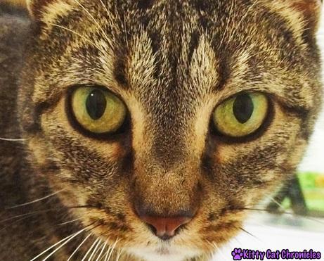 Sassy's Close-up Selfie