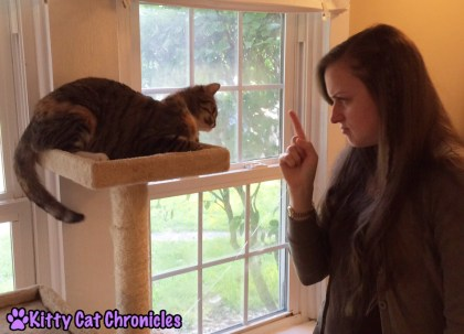 7 More Reasons to Adopt a Shelter Cat - Talking Back