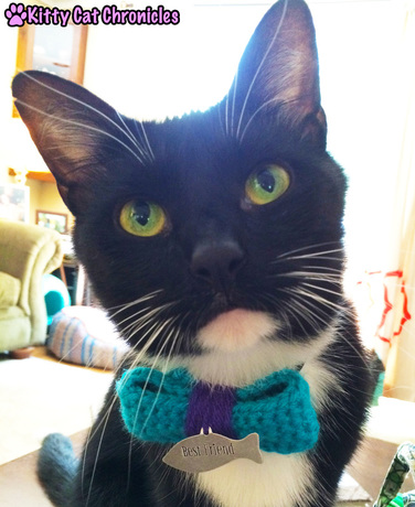 Today I Am Lovingly Sporting My Cat Scratch - Sampson in his Bow Tie
