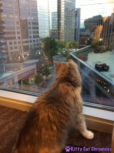 Sophie Goes to the Big City
