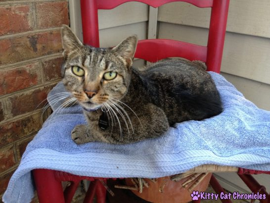 Sassy's Rescue Story - cat in her flower pot