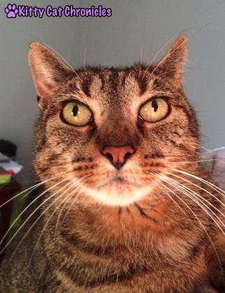 Happy 4th Birthday Sassy - Sunday Selfie