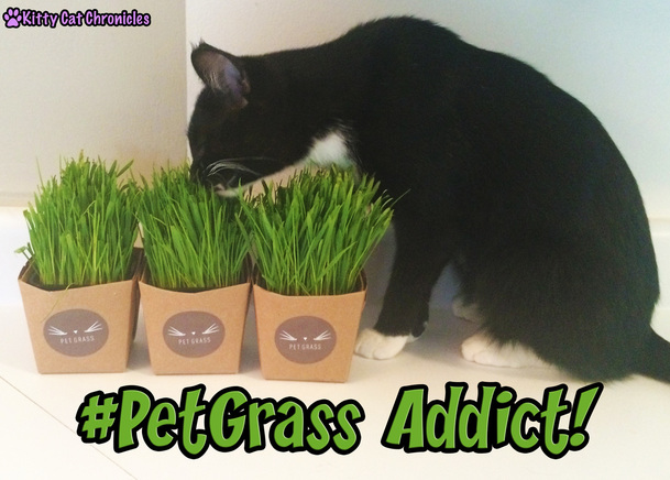 Welcome to #PetGrass-aholics Anonymous - Sampson the #PetGrass Addict