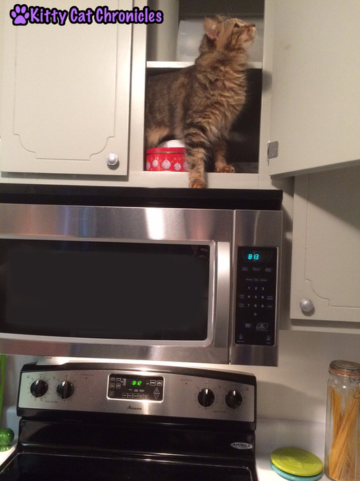 Caster, cat in cabinet