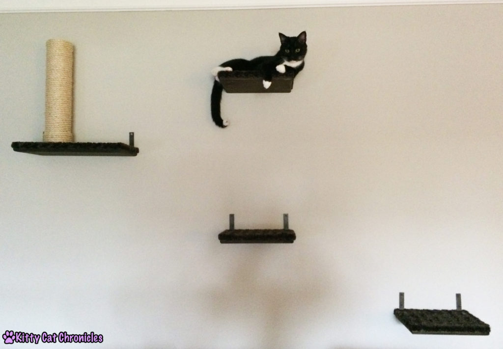 Sampson on Cat Shelves - Catification