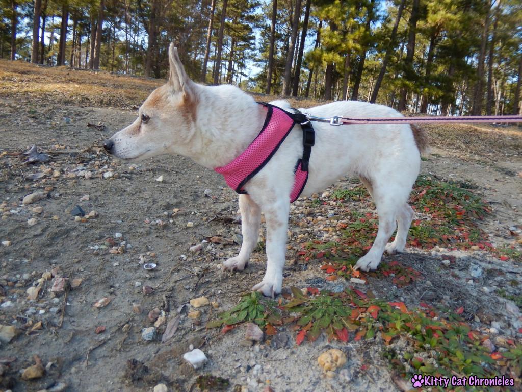 Lucy at Lake Tobosofkee - Dog on Leash