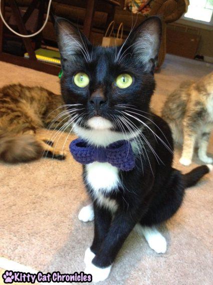 Cat in Bow tie - Sampson