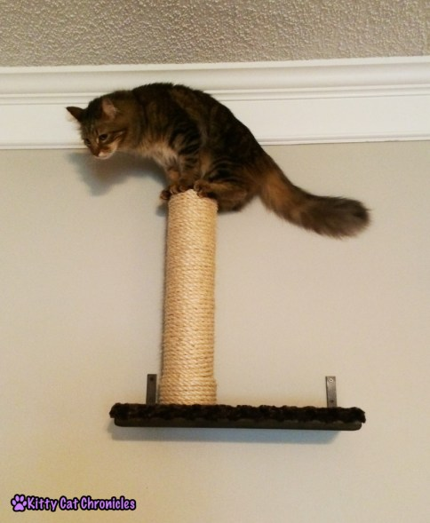 Caster cat on top of scratching post