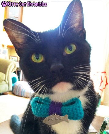 black and white cat in bow tie