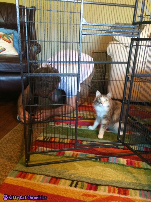 Sophie, cat in cage