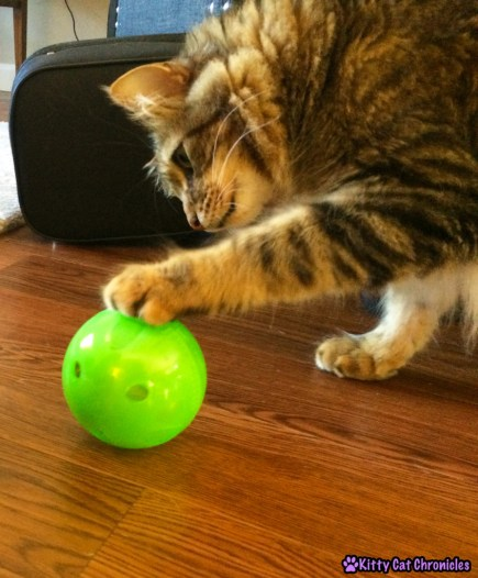 Caster & the PetSafe SlimCat cat toy