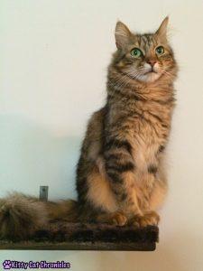 Caster cat on a shelf - Caster's Big Performance