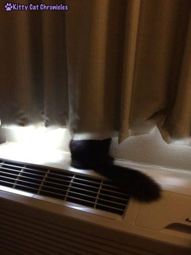 Kylo Ren in the Hotel Window