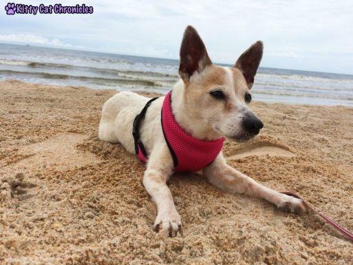 The KCC Adventure Team Goes to Florida - Lucy Dog on the Beach