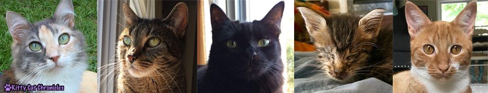 Adopt a Less-Adoptable Pet Week - My Less-Adoptables