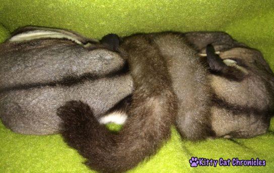 Jubilee & Sydney Snuggling