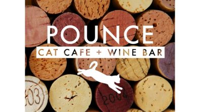 Best Cities for Cat Lovers & Adventure Cats: Charleston, SC - Pounce Cat Cafe + Wine Bar