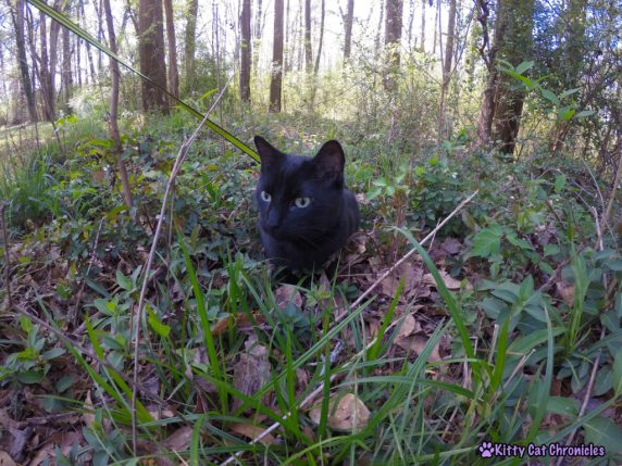 A Play-Date with Sophie & Yeezy | #WobblyWednesday - Yeezy Cat in the Wilderness