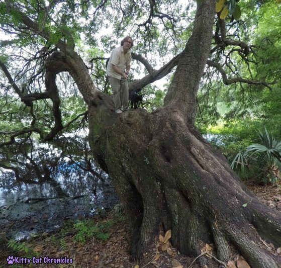 Charleston Adventure Teasers: Kylo Ren at Magnolia Plantation