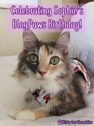 Celebrating Sophie's BlogPaws Birthday