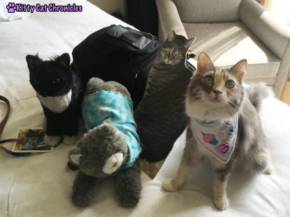 Celebrating Sophie's BlogPaws Birthday - plush and flat guests