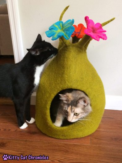 The Ongoing Battle for Sophie's Karma Cat Cave - Sampson Investigates