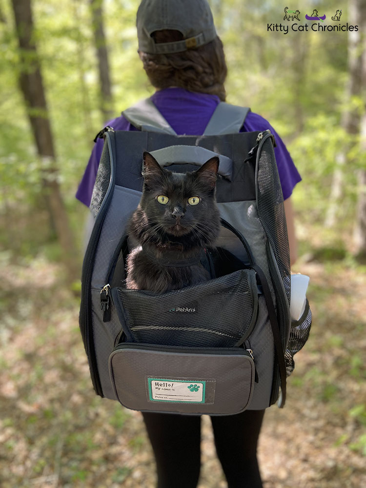 Black Cat in a Cat Backpack Carrier