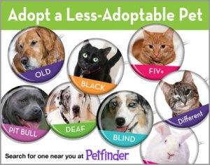 Adopt a Less Adoptable Pet