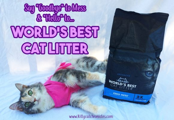 "Say ""Goodbye"" to Mess and ""Hello"" to World's Best Cat Litter 